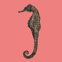 seahorse_21037860